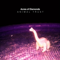 Acres of Diamonds | Animal Trust
