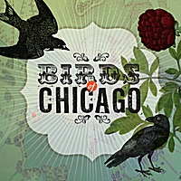 Birds of Chicago | Birds of Chicago