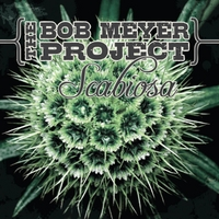 The Bob Meyer Project | Scabiosa
