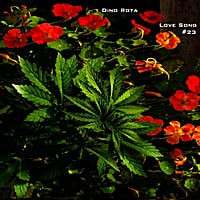 Dino Rota | Love Song Number 23