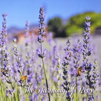 Donna Strong | The Harmony of Bees