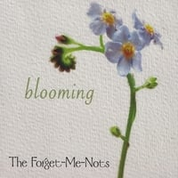 The Forget-Me-Nots | blooming
