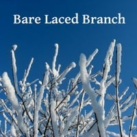 Gary Ceccanese | Bare Laced Baranch