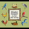 Mister Cooper: Mister Cooper is for the birds