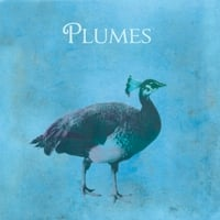 Plumes | Plumes
