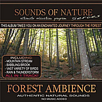 Relaxing Sounds of Nature | Forest Ambience
