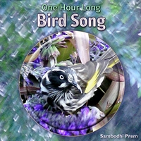 Sambodhi Prem | One Hour Long Bird Song