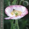 Sheila Gibson Helme: Lightgarden Meditations