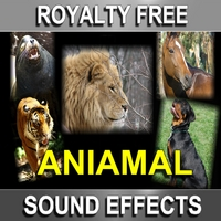 Sound Effect Kings | Royalty Free Animal Sound Effects