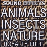 Sound Effects Royalty Free | Animal Sound FX, Insects and Nature