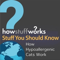 Stuff You Should Know | How Hypoallergenic Cats Work