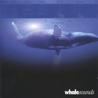 spacesounds.com | whalesounds whale sounds