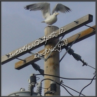 Alida Rohr / Weatheroutpost12 | Electric Gull